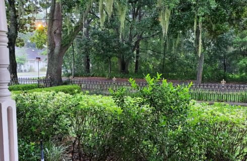 View off the front porch of a home showing empty street and lush green landscaping surrounded by tall trees